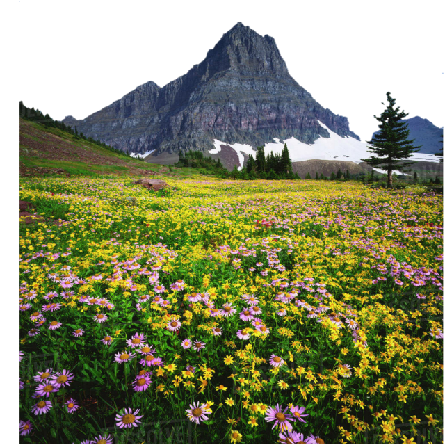 #landscape #mountain #meadow #wildflowers #nature