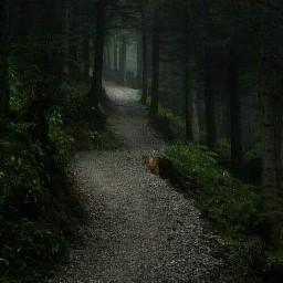 woods forest darkforest way freetoedit