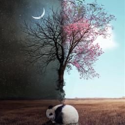 pandabear dayandnight moon tree pinktree freetoedit