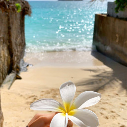aloha hawaii paradise beach water freetoedit