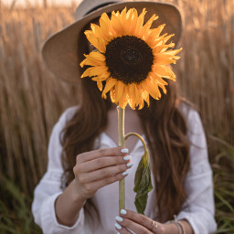 pcfaceless faceless sunflower słonecznik flowers