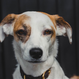 dog dogs animal animals pet freetoedit