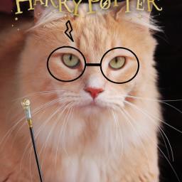 irckittylove kittylove harrypotter kittylive freetoedit