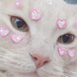 cute pink bambi pale uwu freetoedit