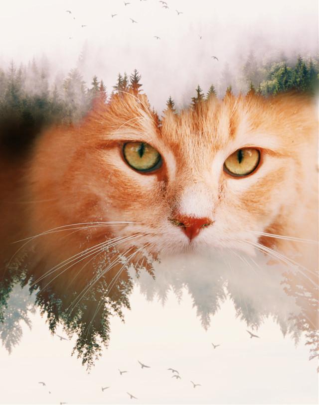 watch tutorials👉 https://youtu.be/BpsIzoDln1g   #dtsdk @dtsdk @picsart #birds #art #freetoedit #cats #cuteanimals #trees #nature #butterfly #forest #cute #coolpic💖 #awesome #doubleexposure #thedoubleexposurelove #remix #remixgalleries #cutest  #irckittylove #kittylove
