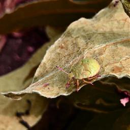 freetoedit nature bug natur wanze