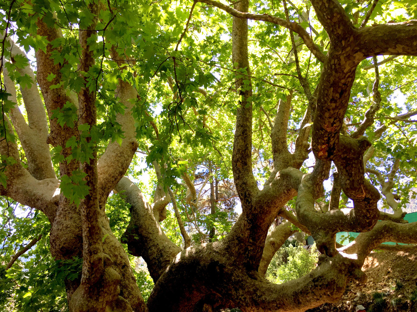 #photography #nature #tree #turkey #kemer #freetoedit