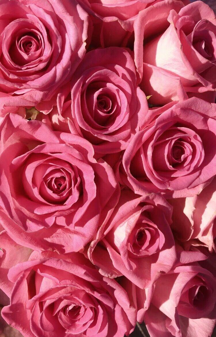 #freetoedit #roses #pink #flowers #gorgeous #iloveit #beautiful #like #love #follow