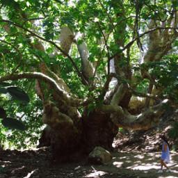 photography nature tree turkey kemer freetoedit