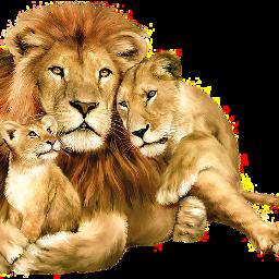 freetoedit sckingofthejungle kingofthejungle lion