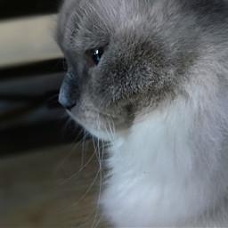 cat cats iwanttoseecats
