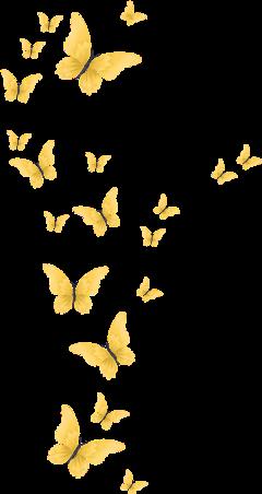 butterfly yellow freetoedit