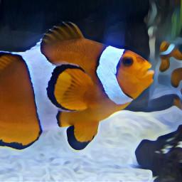 freetoedit fishies fish