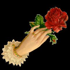 victorian tumblraesthetic lace sweet roses freetoedit