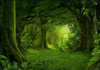background backgroundstickers backgrounds green forest fte freetoedit