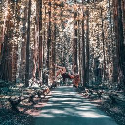 levitation redwoods redwoodforest redwoodtrees california freetoedit
