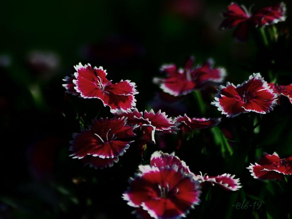 #flowers #nature #summer