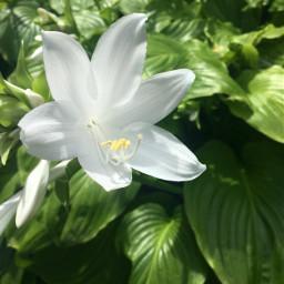 nature naturephotography naturelovers naturalbeauty plants freetoedit