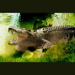 crocodile enviroment water polution care freetoedit