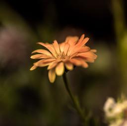 flowers instaflowers poetic poeticnature france