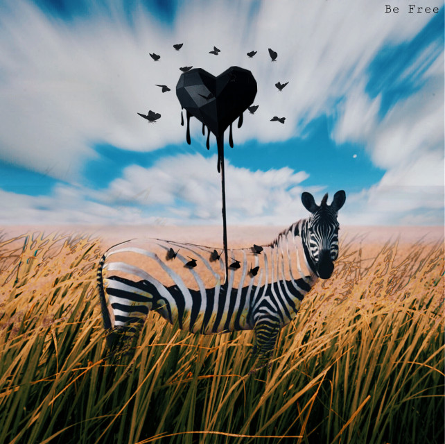 #freetoedit we are all just a  #workinprogress #surreal #zebra #2 #befree