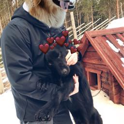freetoedit dog dogday love loveit