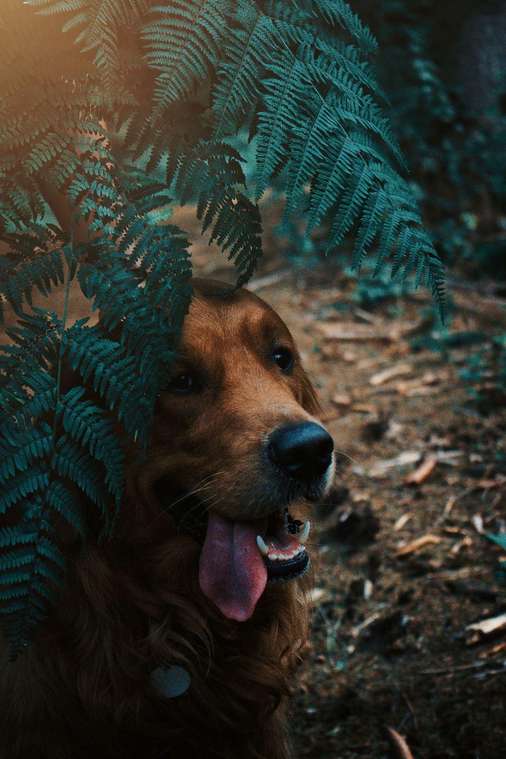 #freetoedit #editit #dog #pet #photography #petphotography #shotiniphone #canon #forest #maylo #fun