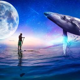 ircpaddleboard paddleboard freetoedit whale colorfulsky