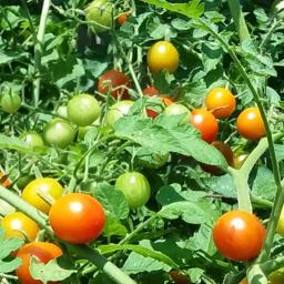 summer bounty backyard morelife moreblessings freetoedit