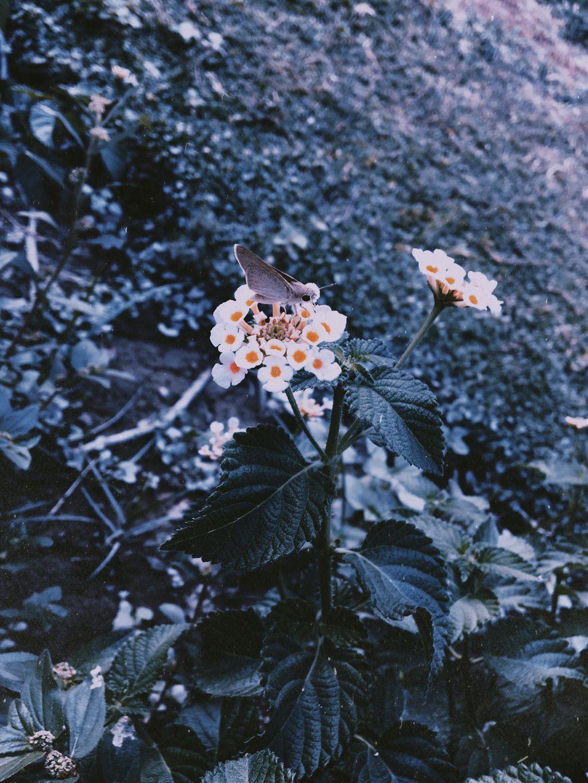 #photography #myclick #flowers #butterfly 🌸🦋🌸
