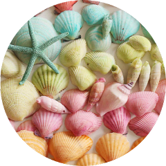 scseashell seashell seashells background colorful freetoedit