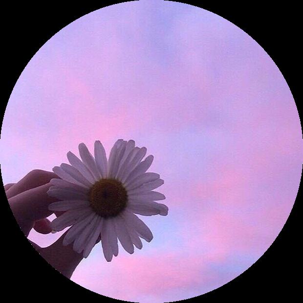 #pink #purple #flower #white #sky #tumblr #aesthetic #circle #freetoedit