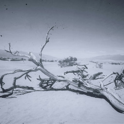 freetoedit branches landscape sky desert