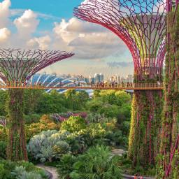 singapore thisissingapore singapore_insta singaporecity singaporetravel freetoedit