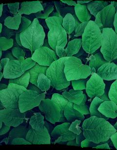 трава зеленый freetoedit