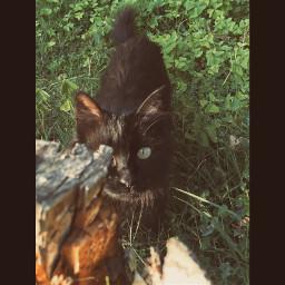 cat matisse love animal nature freetoedit