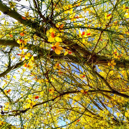 freetoedit southwest westtexas desertlife treescape