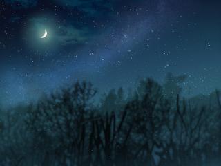 freetoedit forest darkforest nature moon