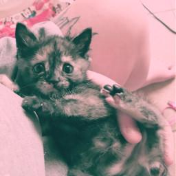 champloo samurai cutie cute kitten freetoedit
