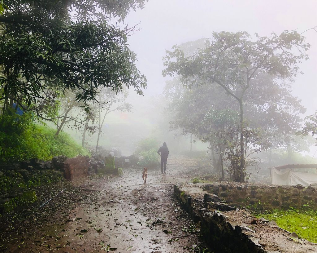 @earth. . . . . . . . . .   #remixit #nature #trees #fog #rain #green #forest #mountains #sky #interesting #travel #adventure #photography #monsoondiaries #freetoedit #fog #dog #travel #adventure #photography
