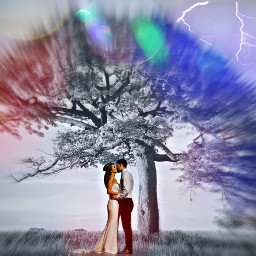 freetoedit kissing under a treeoflife