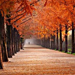 freetoedit treesoflife orangeaesthetic fall person