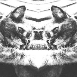 samurai champloo kitten mewmew meow freetoedit