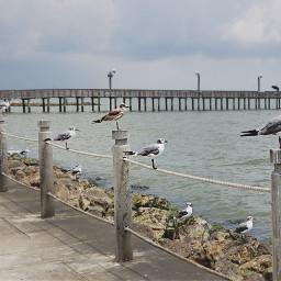 seagulls waiting sitting birds water pcwaterislife freetoedit