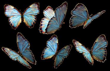 butterflies aestheticloverss aesthetic freetoedit