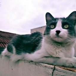 beautifull catsofpicsart cat cats