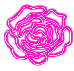 flowers rose neon pink fleur freetoedit