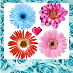 kwiatki freetoedit