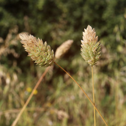 nature grasses outandabout fields