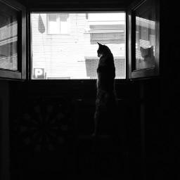 cat observer window